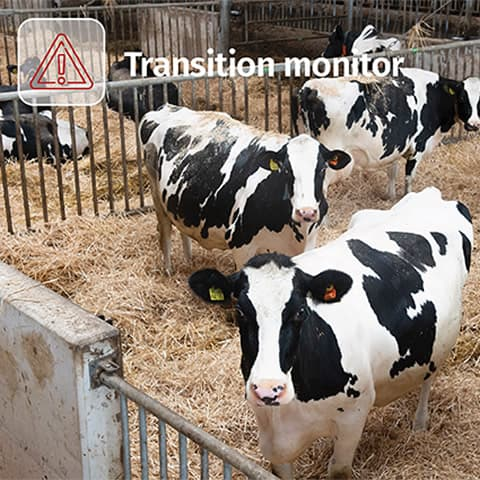 Transition monitor Nutrition module CowManager